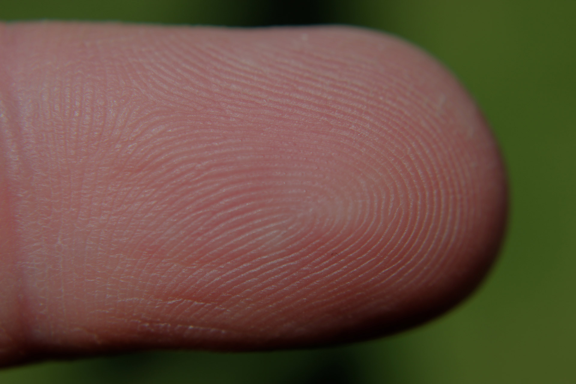 Why Do People Have Fingerprints?